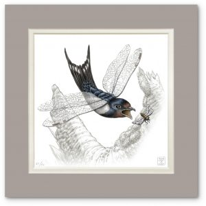 Hirundo zygopteryx by Raoul Deleo. Part of the Terra Ultima Collection.